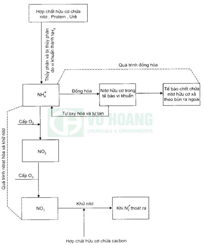 Hình 2: Sơ đồ mô tả quá trình sinh hóa khử nitơ trong nước thải